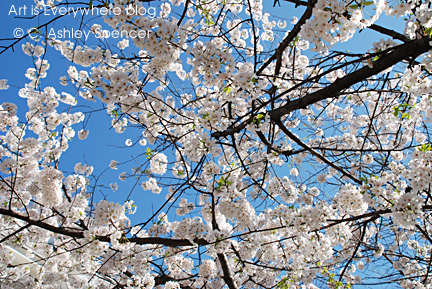Cherry Blossoms. Photo by C. Ashley Spencer. Art Is Everywhere