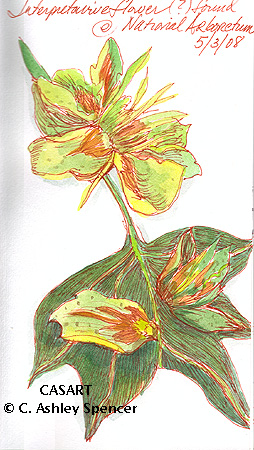 Interpretive Flower Sketch by C. Ashley Spencer