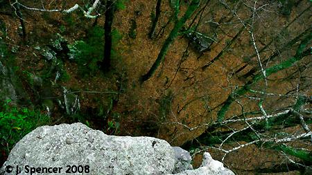 Sewanee Overlook. Photo by Jackson Spencer