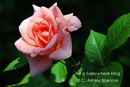 Dantes-Rose_ArtisEverywhere_blog