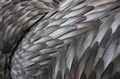 feather art by Kate MccQwire as seen on Art is Everywhere