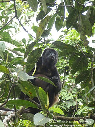 Howler monkey_Panama_Art Is Everywhere