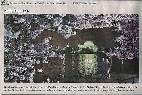 Cherry Blossoms via Washington Post on Art Is Everywwher