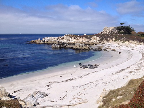 Monterey beach with seals in a cluster on Art is Everywhere, AIE blog