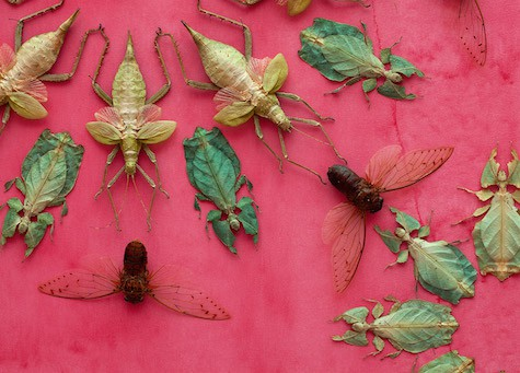 Insectual Design on Art Is Everywhere, describes bugs on the wall for the Renwick Gallery Opening