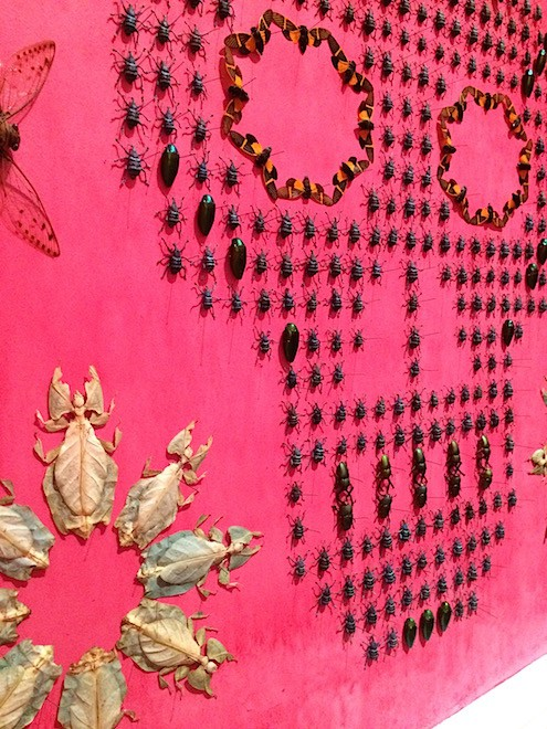 Wonder_Insect wall Jennifer Angus1_AIE