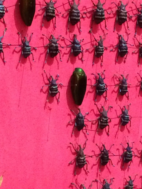 Wonder_Insect wall Jennifer Angus2_AIE