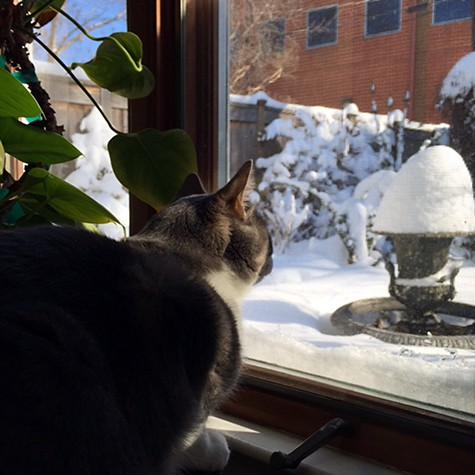 Cat views Snowzilla garden on Art Is Everywhere