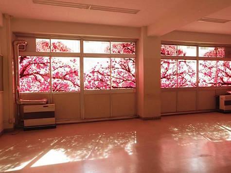 okurie-cherryblossom-1