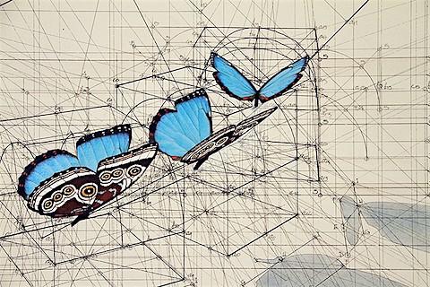 Rafael Araujo_Blue Morpho butterflies_ArtIsEverywhere