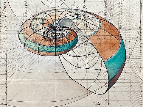 Golden Ratio shell 1_Art Is Everywhere