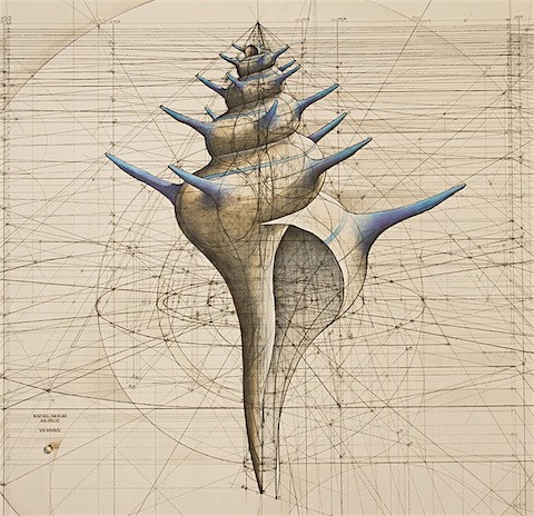 Golden Ratio shell 2_Art Is Everywhere
