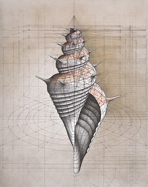 Golden Ratio shell 3_ Art Is Everywhere