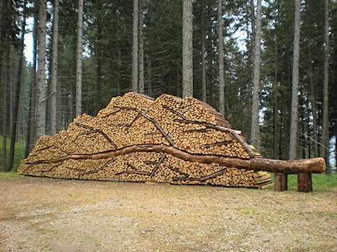 Fallen Tree Wood Pile_AIE