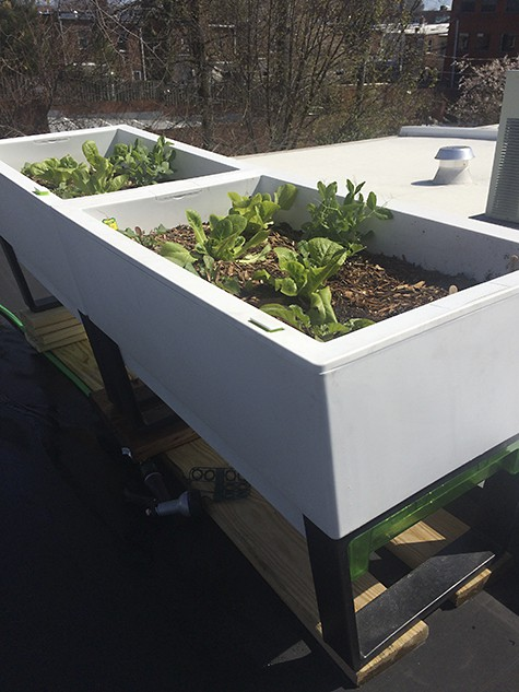 Rooftop Garden GlowPear Containers on AIE