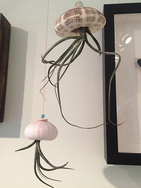 Shell Air Plants on Art Is Everywhere