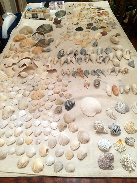 Shell Collection-2_on Art Is Everywhere_Bring Beach Back Home