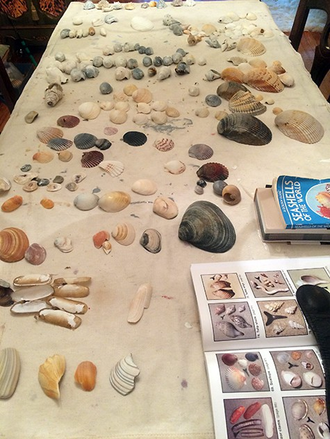 Shell collection-1_on Art Is Everywhere_Bring Beach Back Home