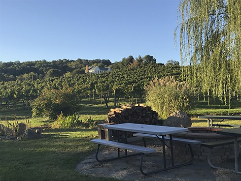Pearmund vineyard and picnic spot_AIE