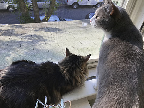 Cats enjoy watching birds_AIE