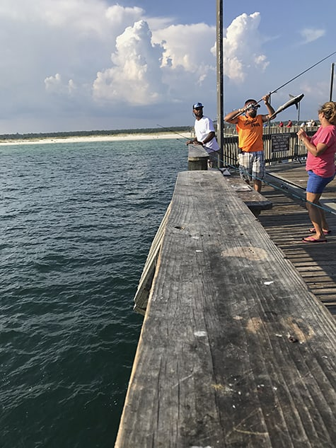 Cobia fish catch on Gulf Shore pier_AIE