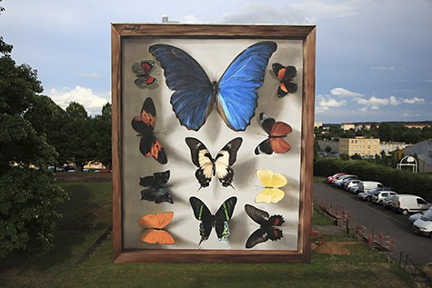 Mantra Blue Morpho butterflies_AIE