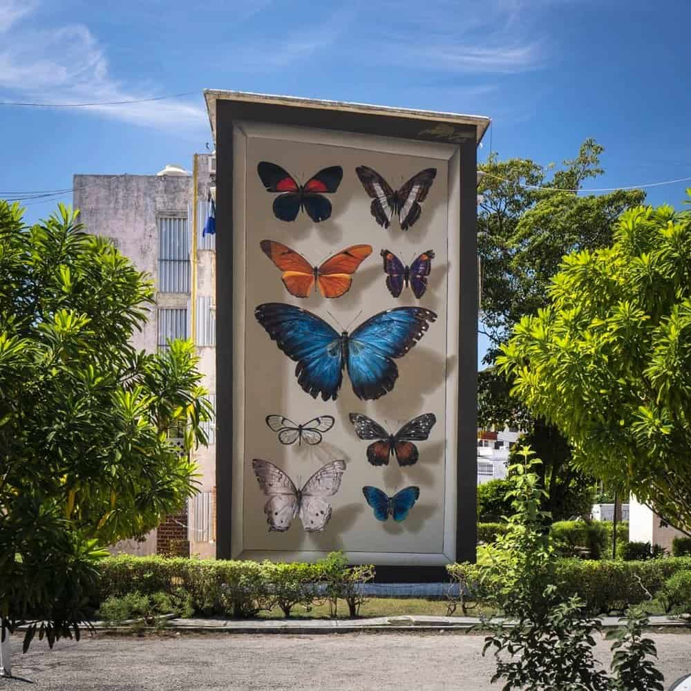 Mantra huge butterfly mural 1_AIE